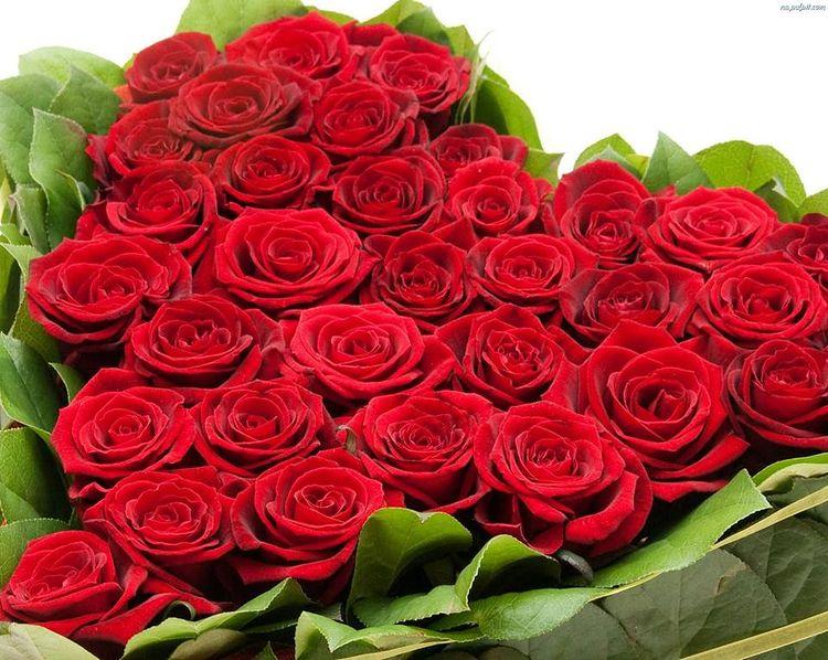 valentine rose ruze od Valentyna svet zeny
