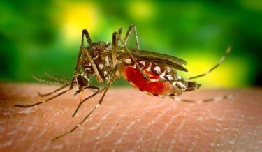mosquito-542156__340